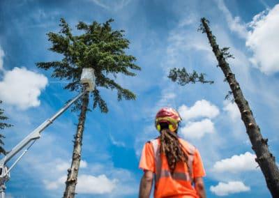Article Chazal chantiers dans le BTP entretient espaces vert , par Photo-entreprise-lyon photographies à Lyon bourgoin-jallieu Benoit Gillardeau